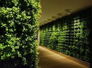 Giardini verticali interni