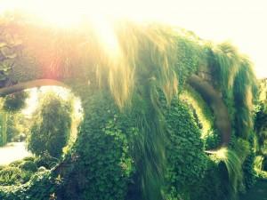 Siepi ed arbusti