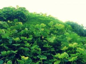 Giardini verticali piccoli