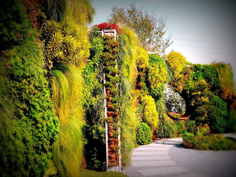 Parete verde verticale  Vivai Le Georgiche