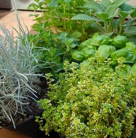 piante aromatiche vivai le georgiche