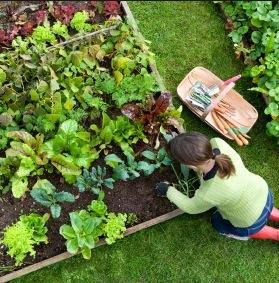 Lavori nell'orto ad agosto