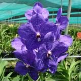 Coltivare orchidee, splendidi fiori esotici!