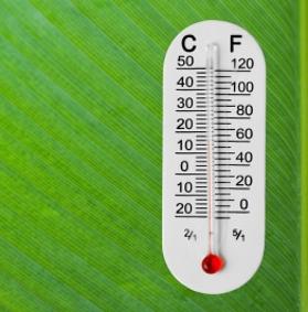 Conservare le piante alla giusta temperatura