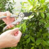 Imparare a potare le piante