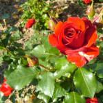 In giardino e nell'orto a novembre