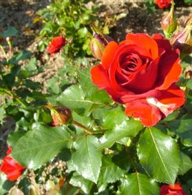 Lavori del giardiniere a novembre
