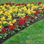 I lavori in giardino nel mese di marzo