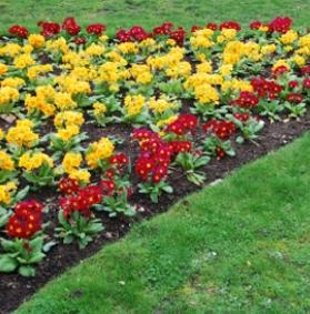 I lavori in giardino a marzo
