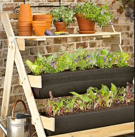 coltivare ortaggi in vaso sul terrazzo o sul davanzale