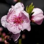 In giardino e nell'orto ad aprile