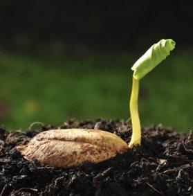 Coltivare dai semi