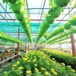 Scegliere nuove piante: come orientarsi
