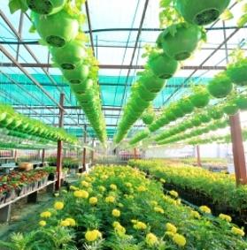 Come scegliere nuove piante
