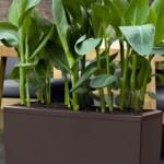 Coltivare senza terriccio: la coltura idroponica