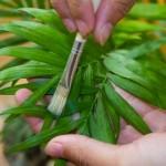 Pulire le piante: ecco come fare!