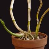 Quiescenza: la fase di riposo delle piante