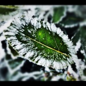 piante e il freddo