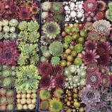 Proteggere le piante grasse dal freddo!