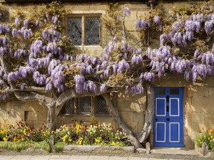 wisteria-covered_cottage__the_cotswolds__england