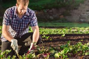 lavori-del-mese-giardino-settembre_NG1
